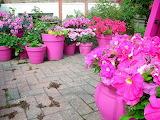 Garden-flower-pots