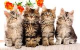 Four Kittens...
