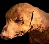 #Mummified Dog of Ancient Egypt