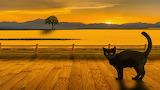 Landscape cat pixabay