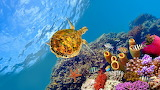 Colorful World in the Red Sea