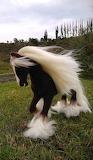 koń z białą grzywą