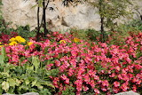 Flowers-garden-Castelmonte-Italy