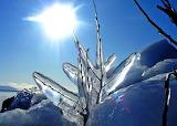 Winter Solstice - Frozen Twig