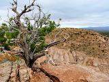 2015-09-22-New-Mexico-Tree