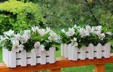 Flowers, beauty, bouquet, garden