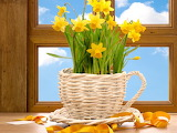 Cup of daffodils