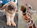 Sleepy bunny and giraffe