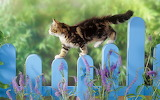 Cute-kitten-wallpaper