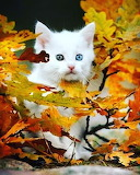 Leaves and Kitty