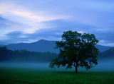 Hickory tree Cades Cove at sunset