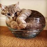 Cat like liquid