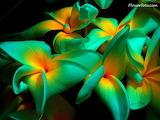 Flor exótica24