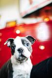 Doggie cute