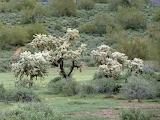 Arizona TontoNationalForest 1