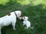 You Got Me A Puppy!