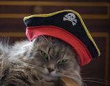 Adorable little pirate