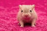 Cute-animal-pics-part188-4