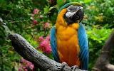 Parrot, branch, trees, nature, flowers, yellow, blue