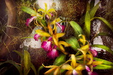 Flower-orchid