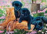 #Black Lab Puppies by Kip Riebrand