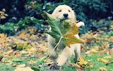 With an autumn leaf