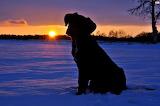 Sunset &dog