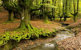 Forests Rivers Trees