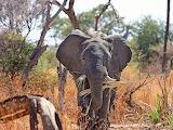 Elefante en su abita