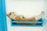 Sleeping Cat on a Shelf