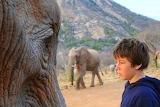 The Wisdom of Elephants ~ Ithumba, Kenay