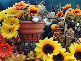1-venus--cute-kitten-in-bicycle-flower-planter--kitty-cat-in-sun
