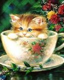 kitten in mug