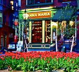 Tulips and Mamma Maria in North Square