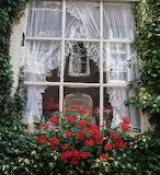 Amsterdam-window-box