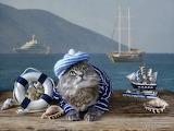 Cat in a marine costume