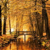 Oer-Wout - Amber Autumn