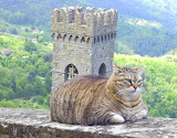 Fat Cat in Tuscany