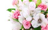 Flower garden plant (348)