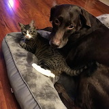 Kitty sharing his bed