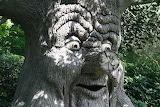 Fairy tree fantasy efteling