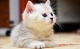 Cute Kitten...