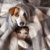 A cat and a dog snuggle under a blanket