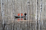 Boating Through the Birch Forest