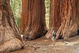 the largest trees nature photos