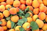 Apricot1
