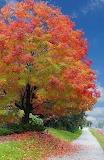 Big gorgeous tree