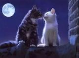 Chats romantiques