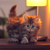 Kitten on Desk...