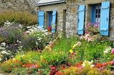 Cottage garden, Blue shutters
